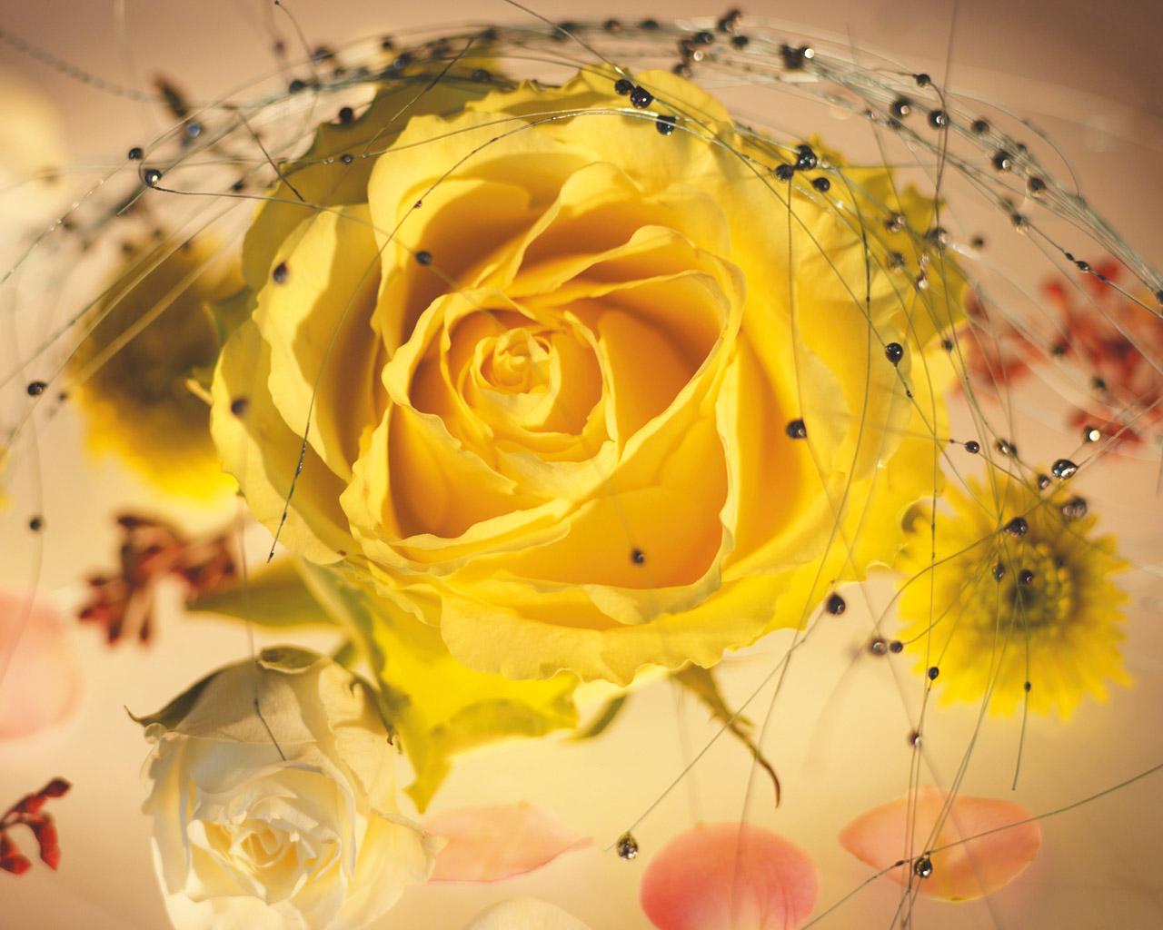 florarosejaune14840ab1.jpg
